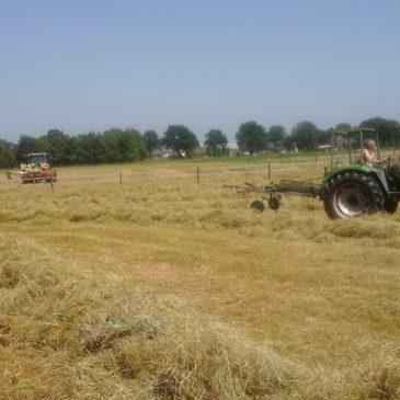 Gras gemaaid